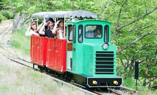 シグナス森林鉄道