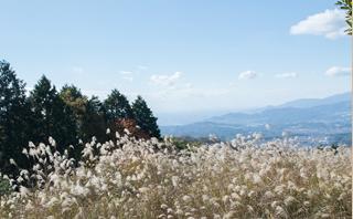 大阪府が選定している自然の名所 「大阪みどりの百選」に指定されています