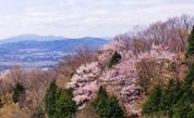 上杉尾根コース