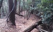 天台山コース